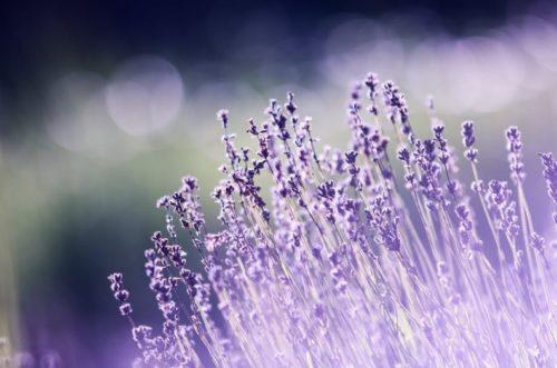 ふわっと香る癒し系香水 ~オススメの香水&スメハラにならないつけ方を教えます~