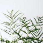 観葉植物を都内で探すなら♡オシャレでおすすめなショップ5選 アイキャッチ画像