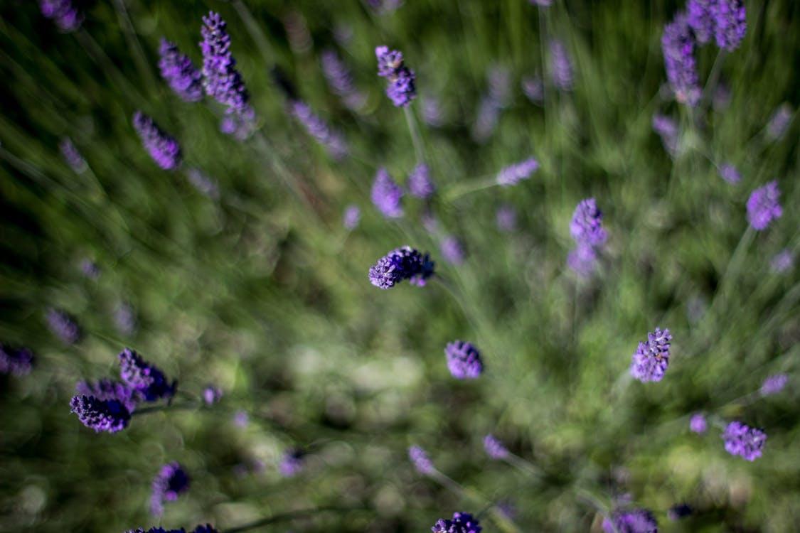 pexels-photo-27759