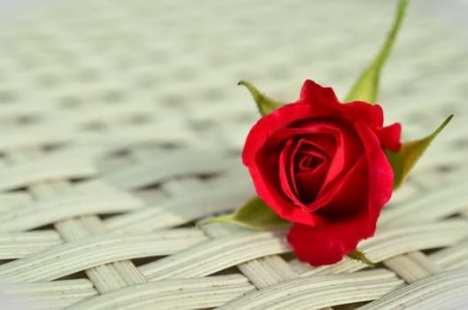 rose-red-rose-romantic-rose-bloom-1