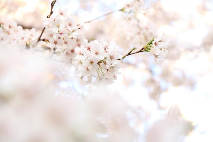 東京のおすすめお花見スポット&桜を楽しめるレストランを紹介
