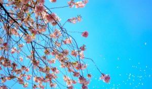 おすすめお花見コーデ◎薄着はまだ早い!?風邪を引きやすいお花見には寒さ対策を! アイキャッチ画像