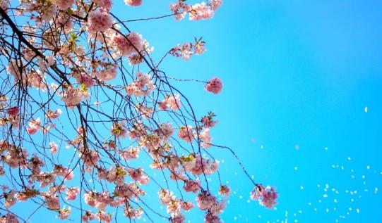 おすすめお花見コーデ◎薄着はまだ早い!?風邪を引きやすいお花見には寒さ対策を!