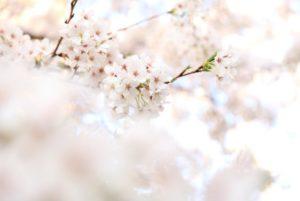 お花見におすすめの春のコーデ特集♡シーンごとにトレンドアイテムを着こなそう! アイキャッチ画像