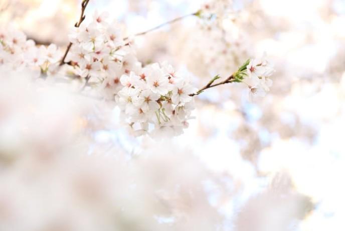 お花見におすすめの春のコーデ特集♡シーンごとにトレンドアイテムを着こなそう!