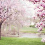 お花見スポット・目黒川沿いにあるおすすめレストラン6選! アイキャッチ画像