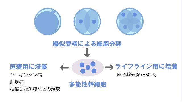 多能性幹細胞とは