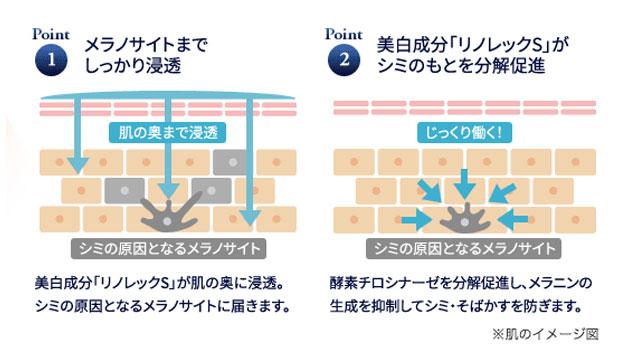 サンスターエクイタンス_成分図